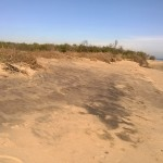 La sabbia nera di Metaponto è più radioattiva di quella nei pressi dello scarico marino dell'Itrec di Trisaia.