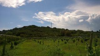 lato nord dell'Itrec - agosto 2016 - terreni coltivati a ridosso del camino Itrec
